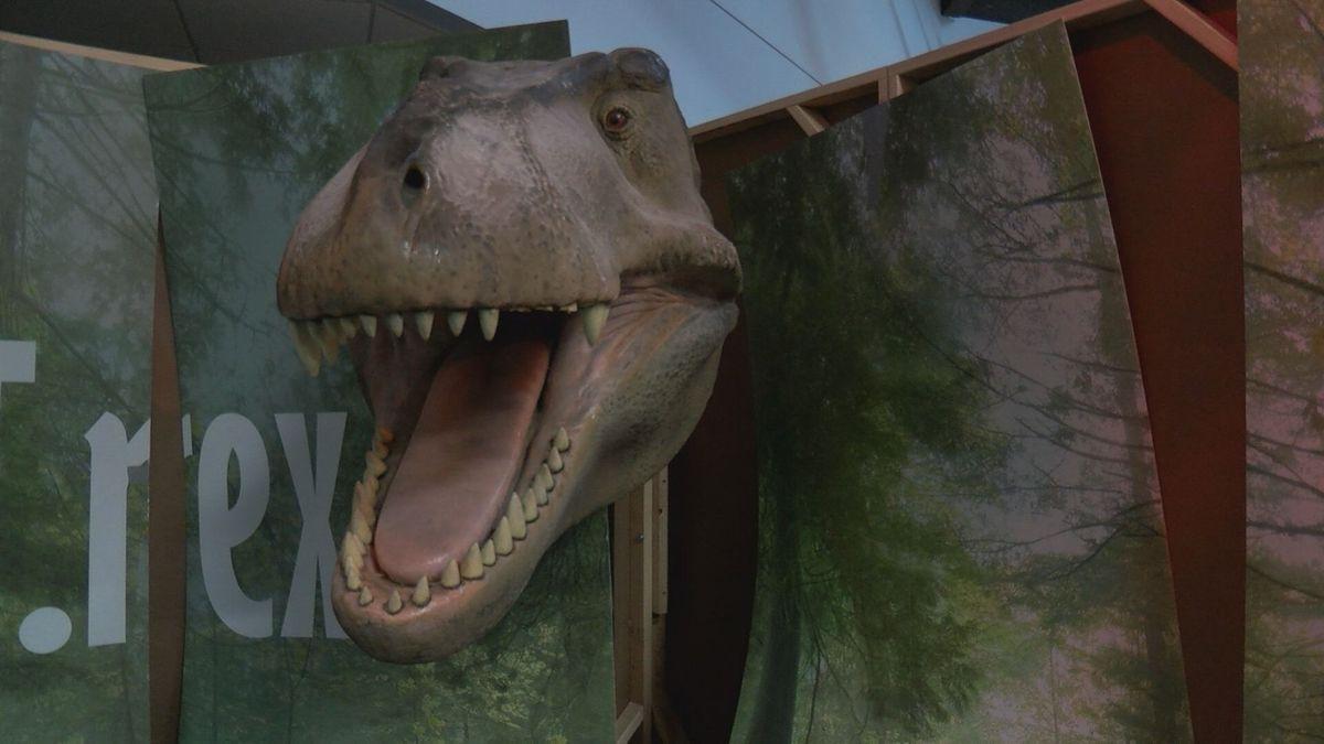 Don Harrington Discovery Center to debut predator vs plant-eater exhibit