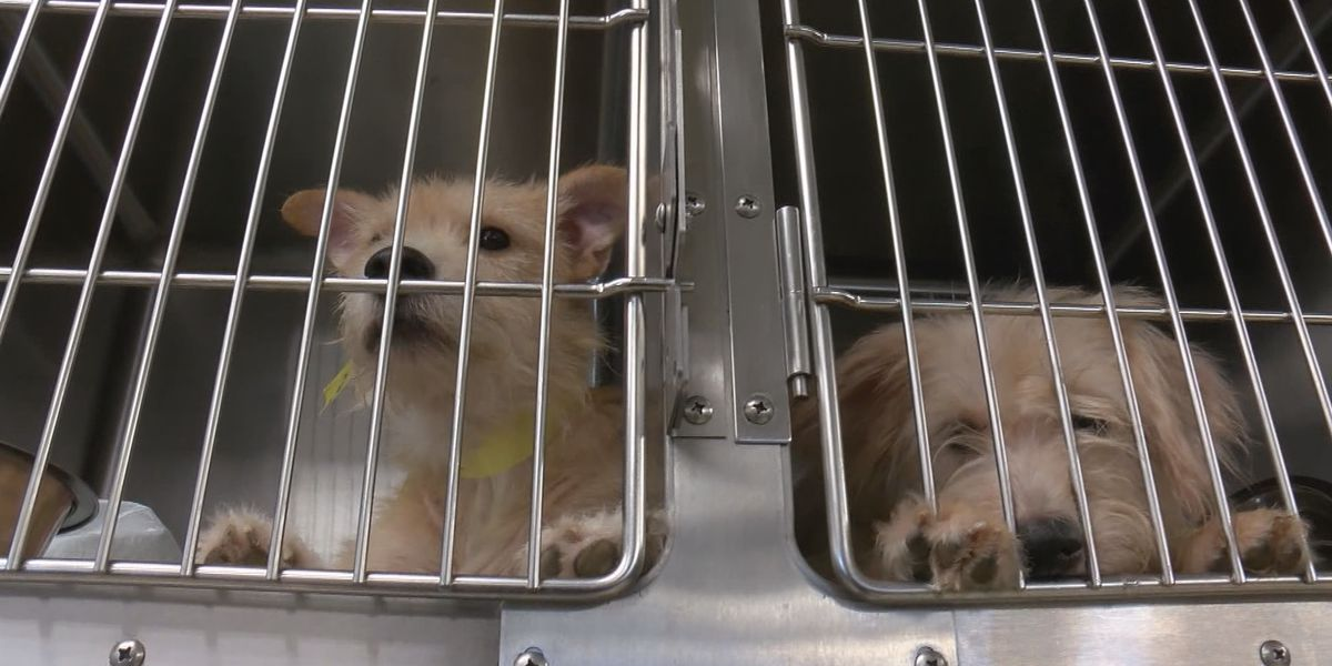 Gracie's Project struggling to care for 180 animals in the shelter