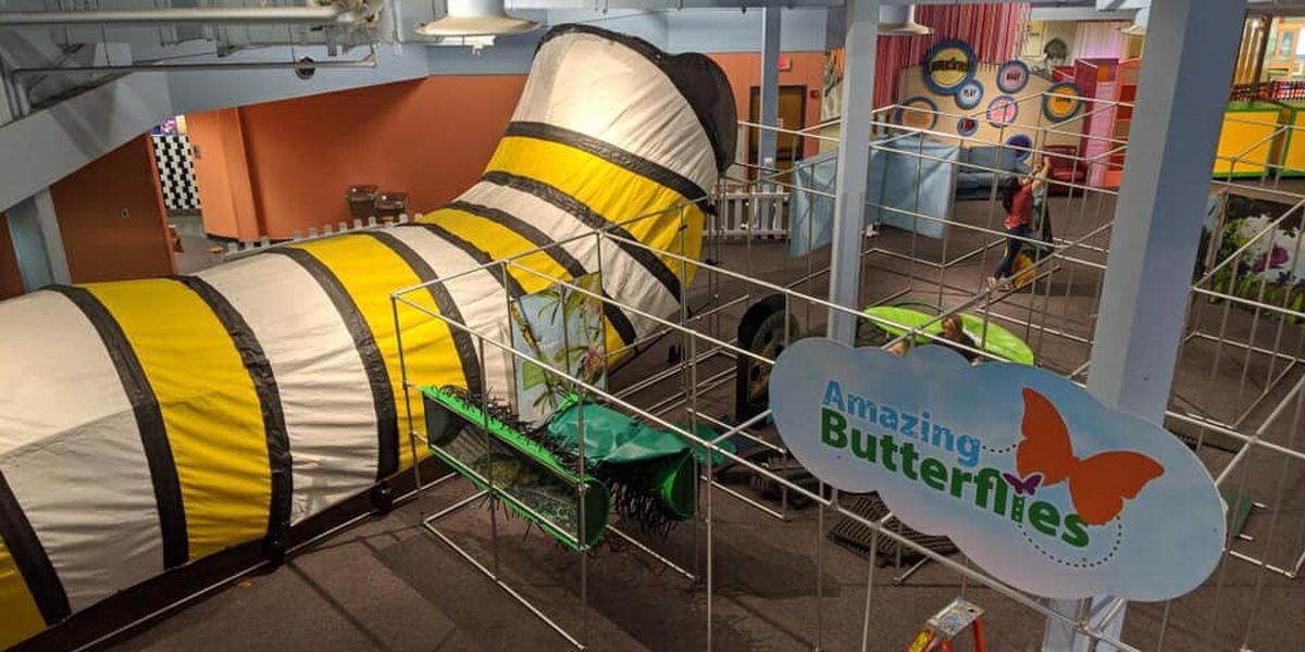 'Amazing Butterflies' exhibit coming to Don Harrington Discovery Center