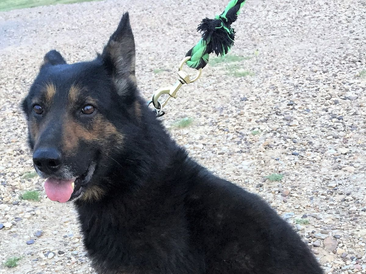 Guymon Police Department asking for donations for K9 Poker