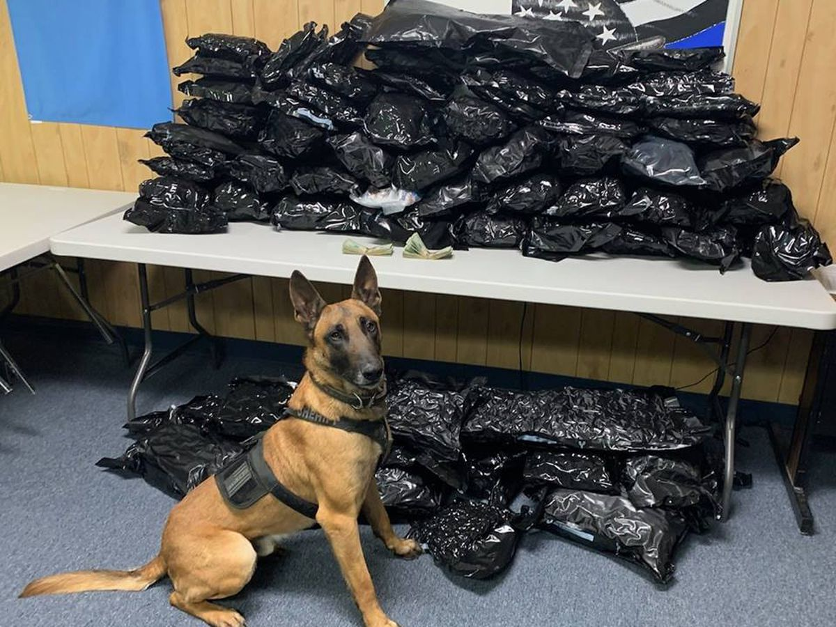 1 arrested after officials find 150 pounds of marijuana during traffic stop in Gray County