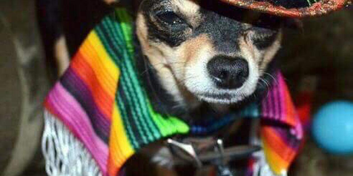 Cinco De Mayo salsa competition benefits shelter animals