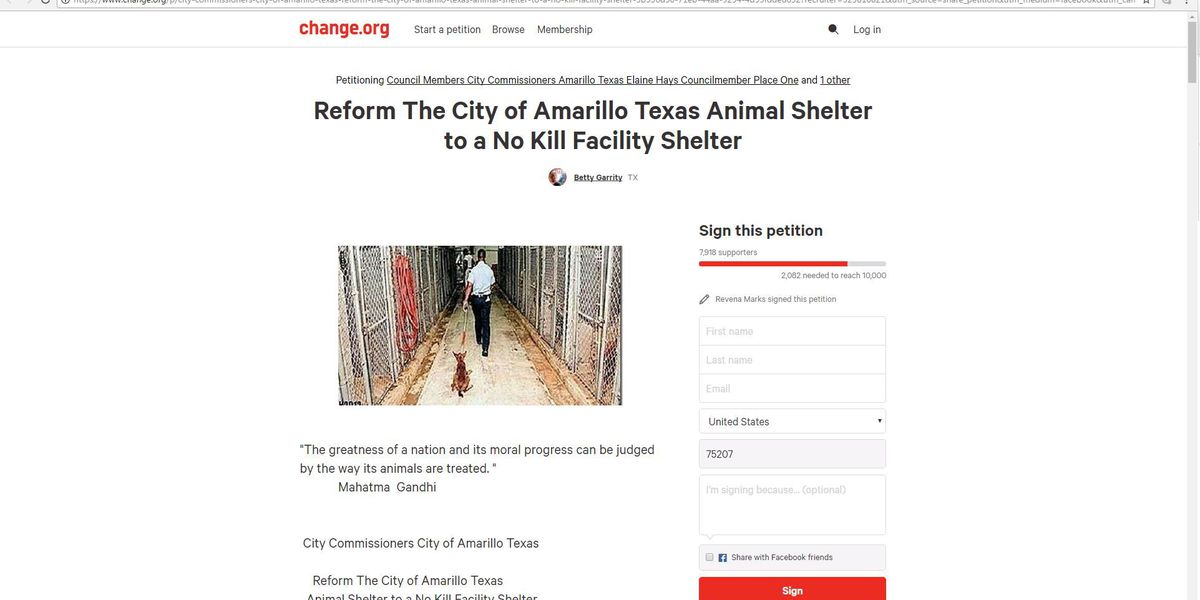 """""""No kill"""" shelter petition gains momentum with new city council"""