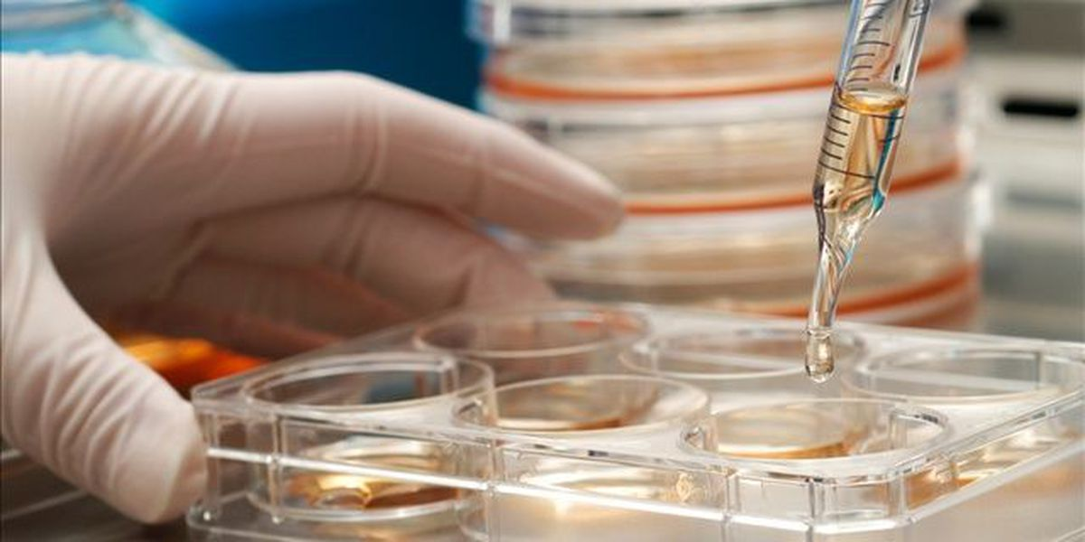 Texas OKs experimental stem cell therapy limits