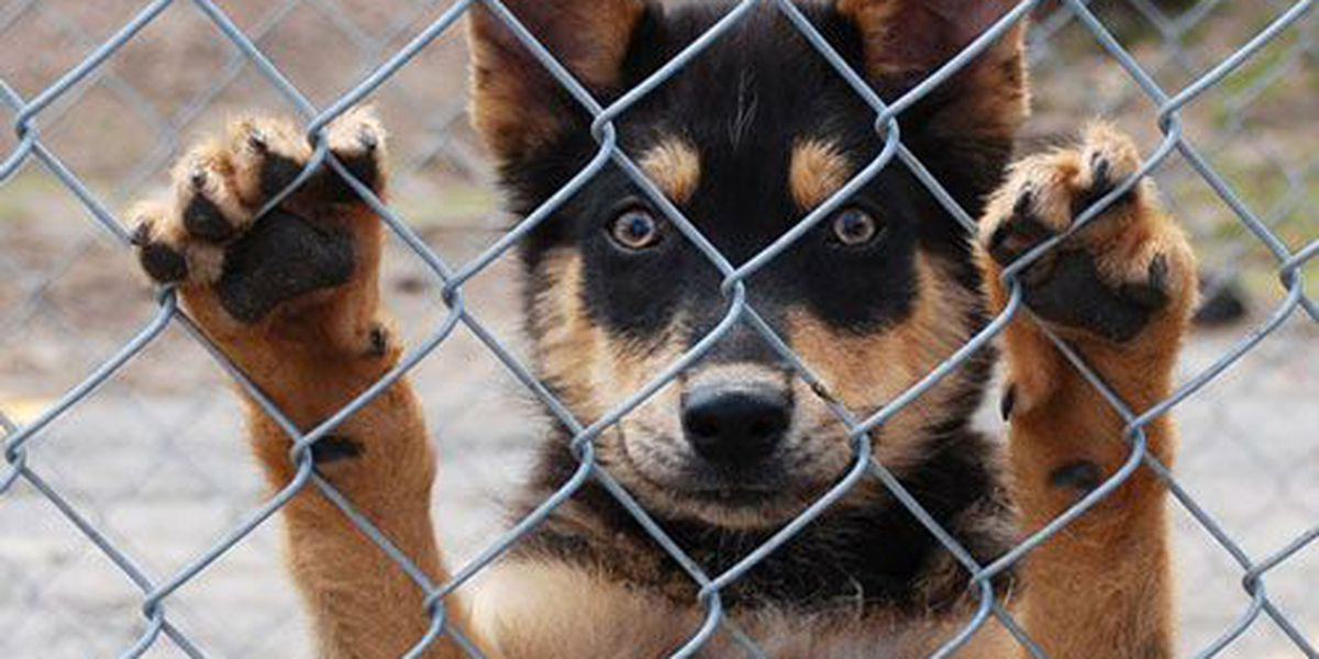 Humane Society shoots for record adoption numbers