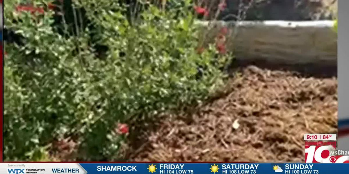 DIY: Greg Lusk talks about how mulch is important during the summer