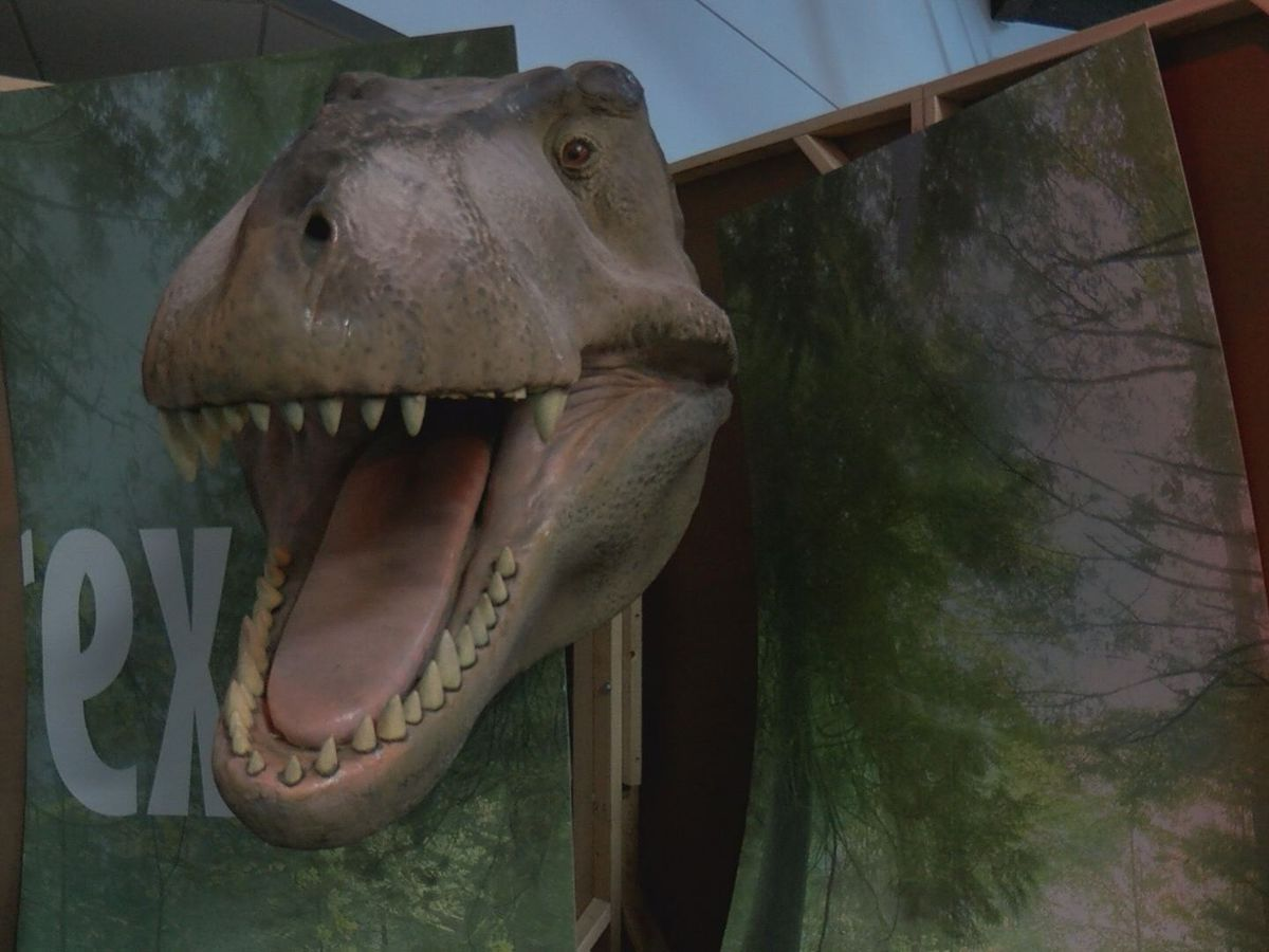 Don Harrington Discovery Center to debut predator vs plant-eater exhibit