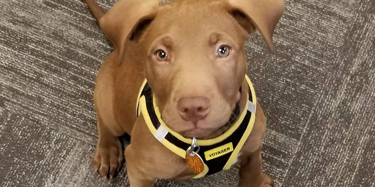 Shelter puppy becomes member of Borger emergency response team