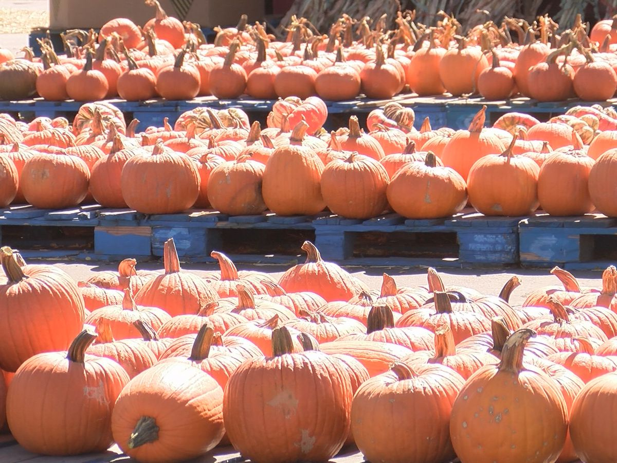'Something fun, something that feels normal': Amarillo pumpkin patches experience boost in sales