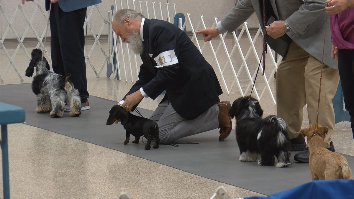 Panhandle Kennel Club dog show wraps up Sunday at Amarillo Civic Center
