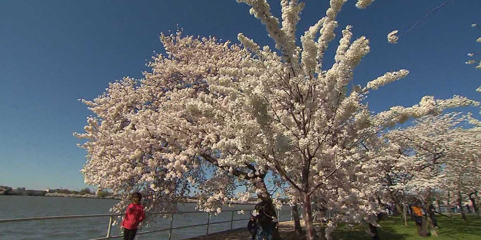 Spring into allergy season with these tips to feel better