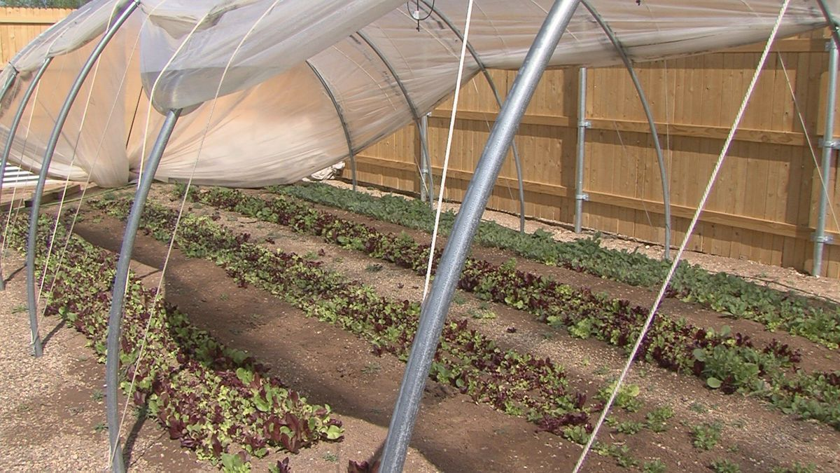 Square Mile Farm accepting SNAP benefits from low-income residents