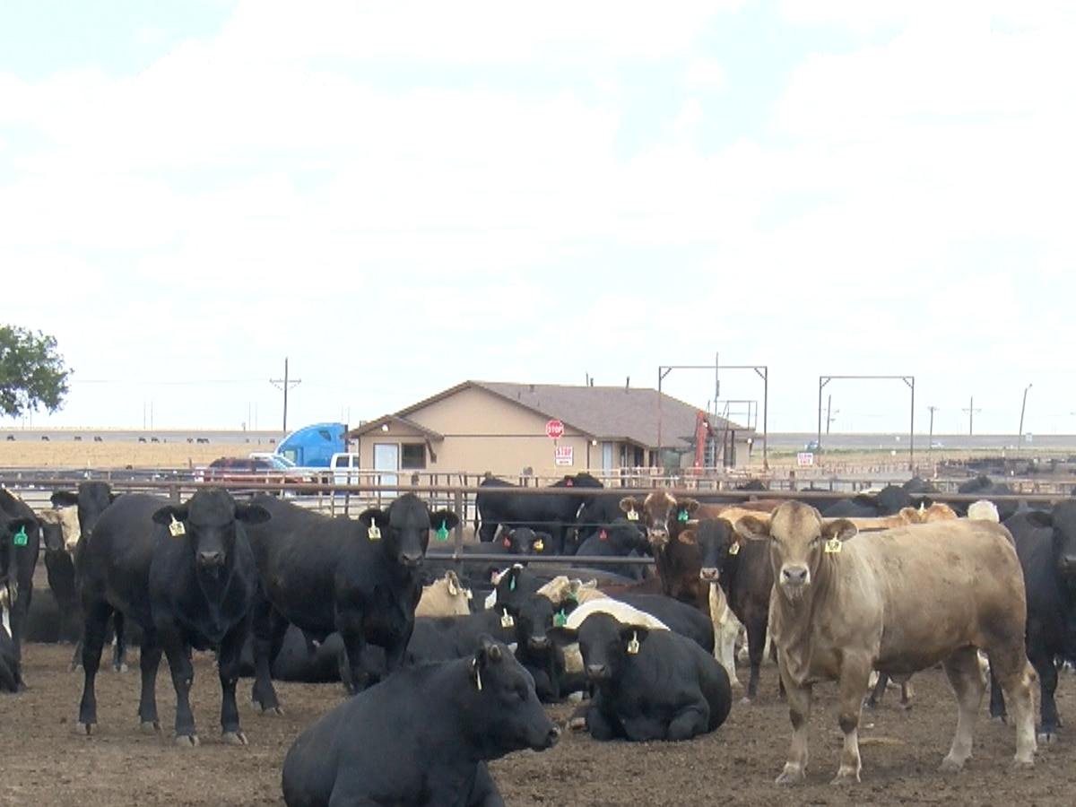 International trade deal impacts Texas Panhandle farmers