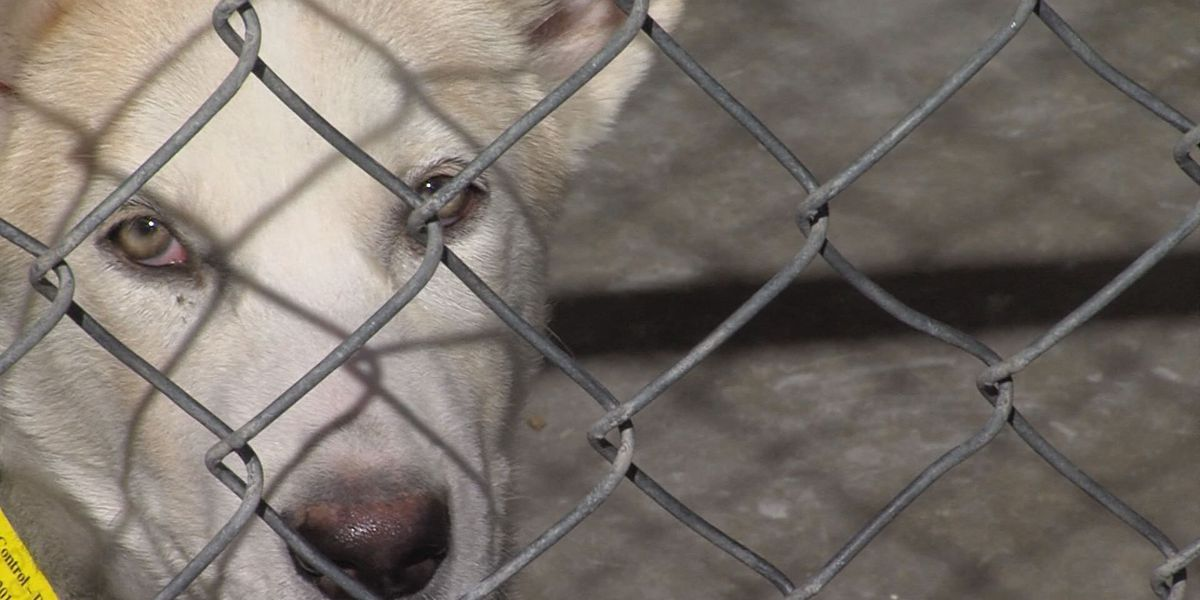 "Bestiality ""problem"" in Amarillo could be controlled with new ordinance"