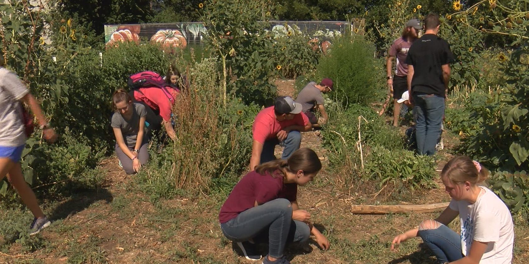 Area non-profits work to recover from lack of volunteers in summer