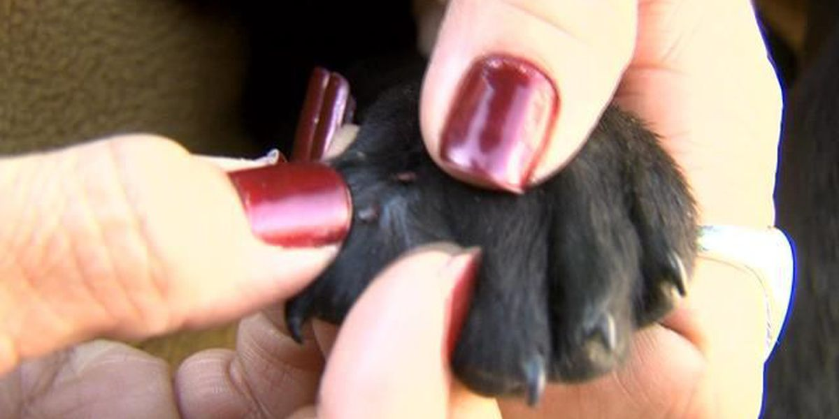 Fleas and Ticks Surviving the Winter on Your Pet