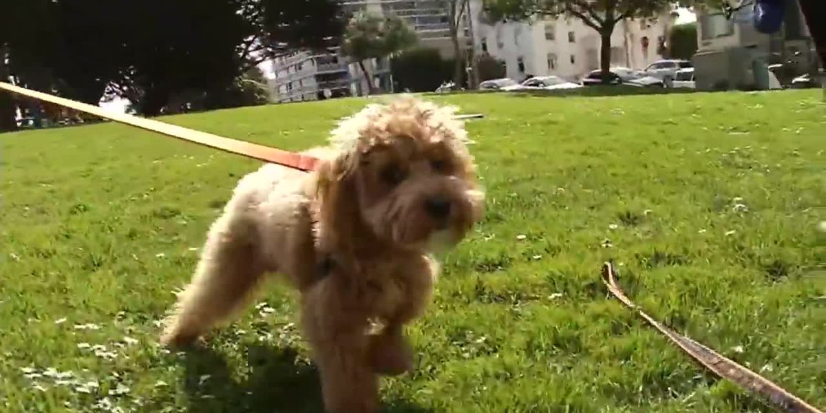 Dogs sickened after eating pot, amphetamines at San Francisco park