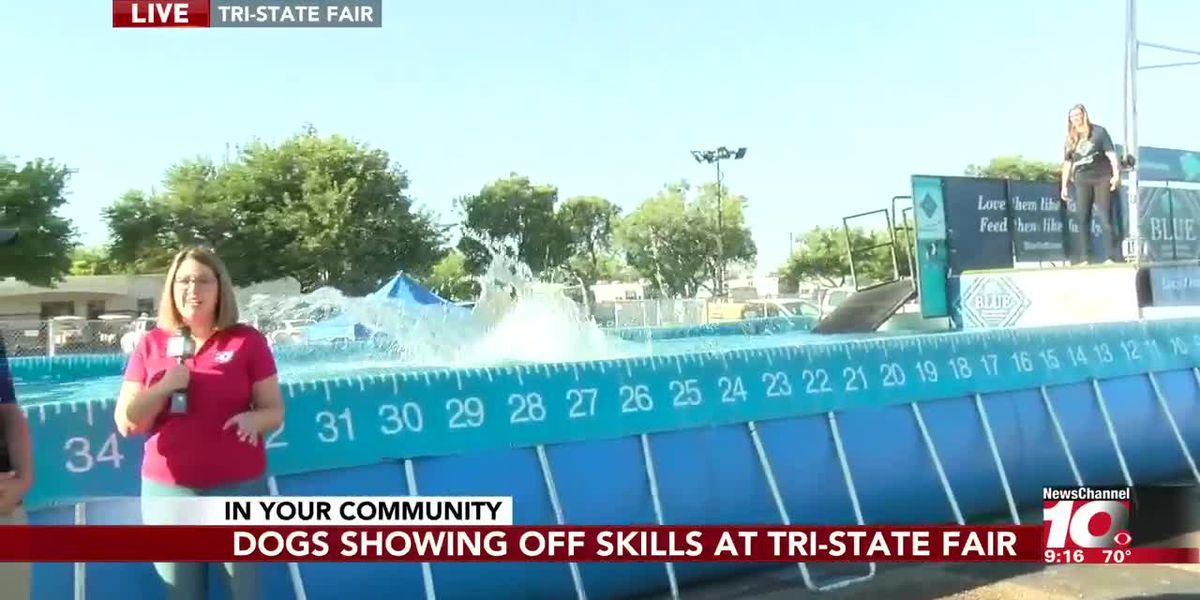 INTERVIEW: Dogs show off swimming skills at the Tri-State Fair