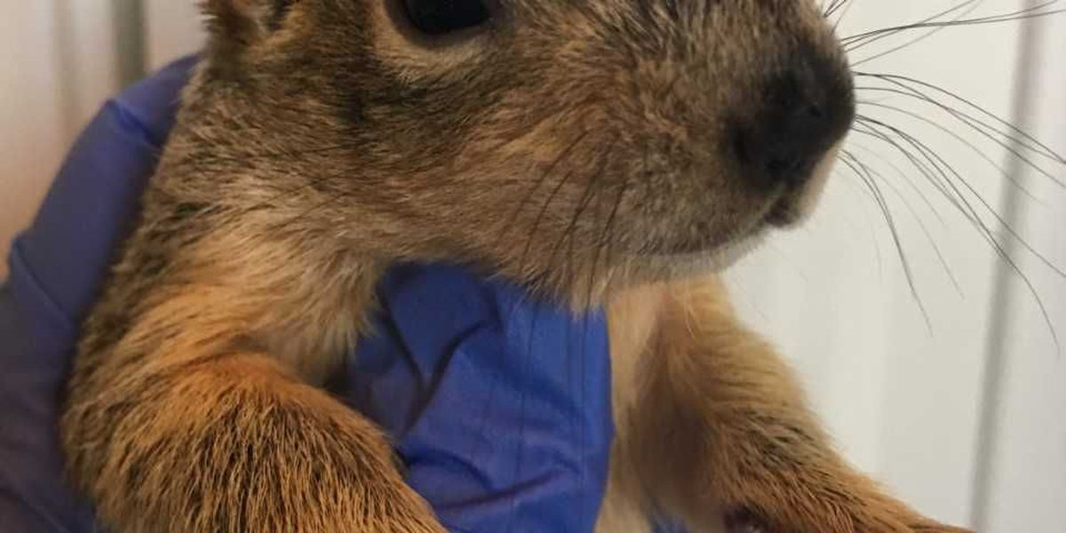 Good News with Doppler Dave: Sky the Squirrel's recovery