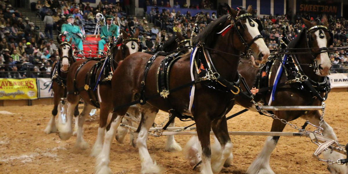Budweiser Clydesdale Carriage Parade to kickoff WRCA World Championship Ranch Rodeo