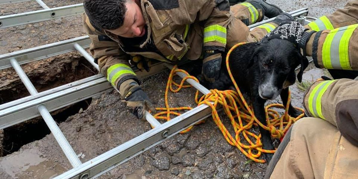 Firefighter adopts dog named 'Lucky' saved from sinkhole