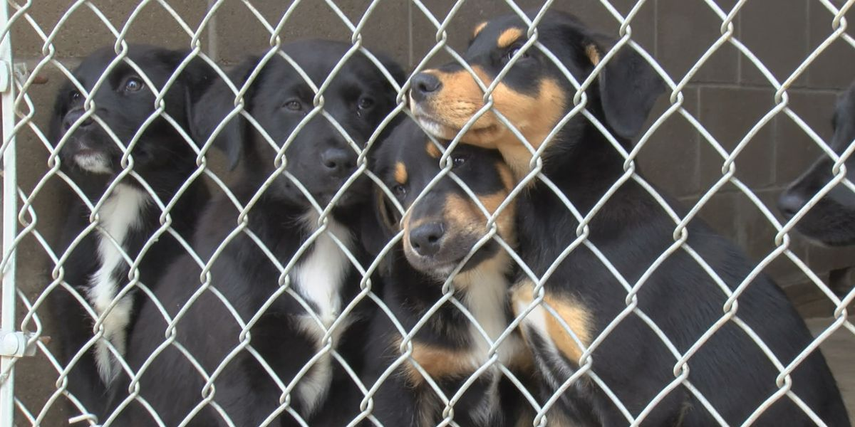 Deaf Smith County animal shelter needs separate quarantine building