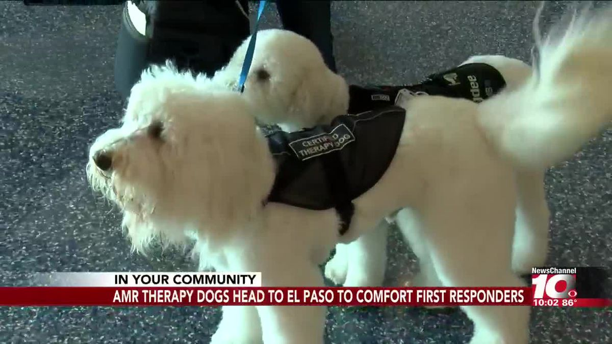 El Paso Gas Prices >> AMR Therapy Dogs head to El Paso to comfort first responders