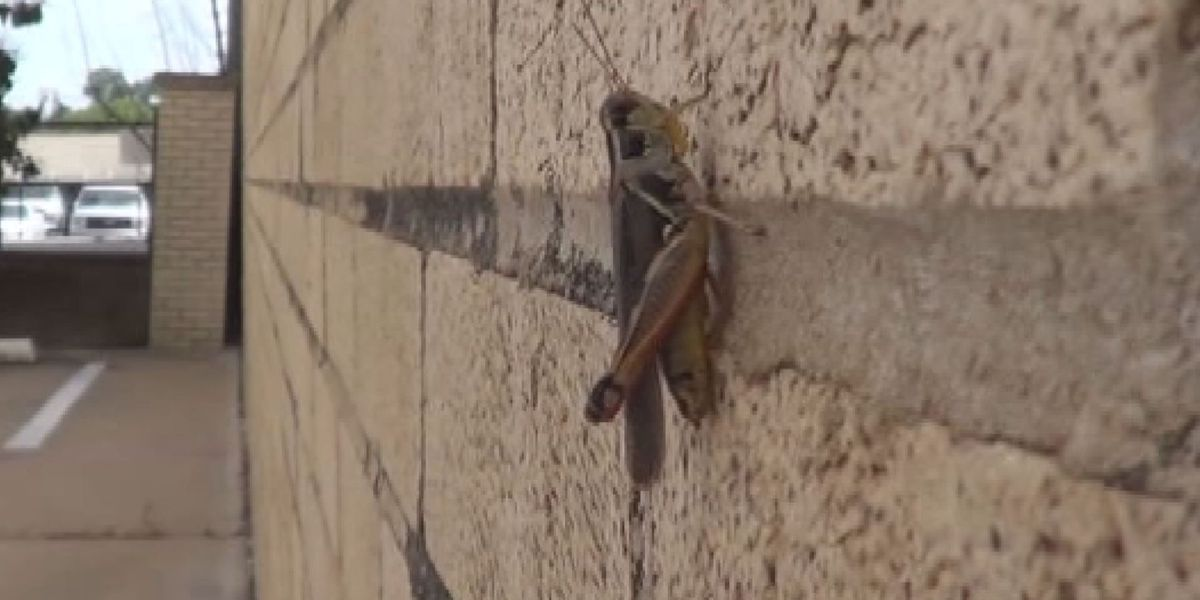 Invasive insects making their way into the Panhandle