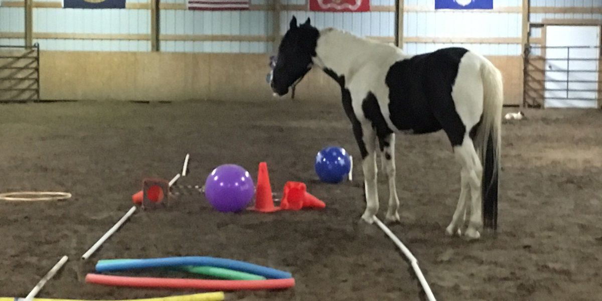 Veterans Resource Center providing equine therapy for area veterans