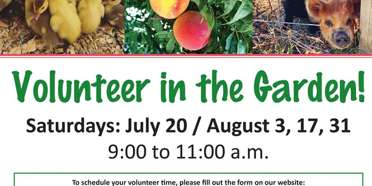 The Garden at High Plains Food Bank looking for volunteers