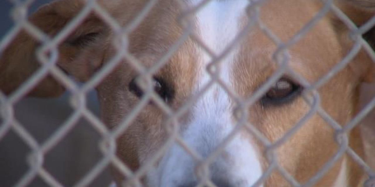 Humane Society changing schedule to allow more rescues