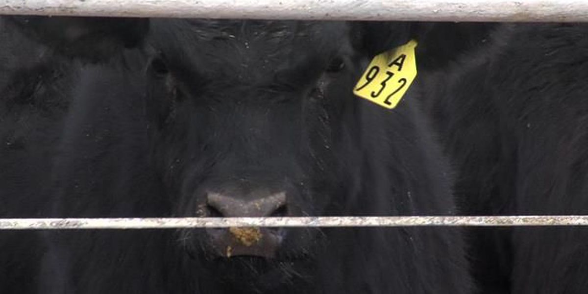 Economic outlook for the cattle industry in 2014