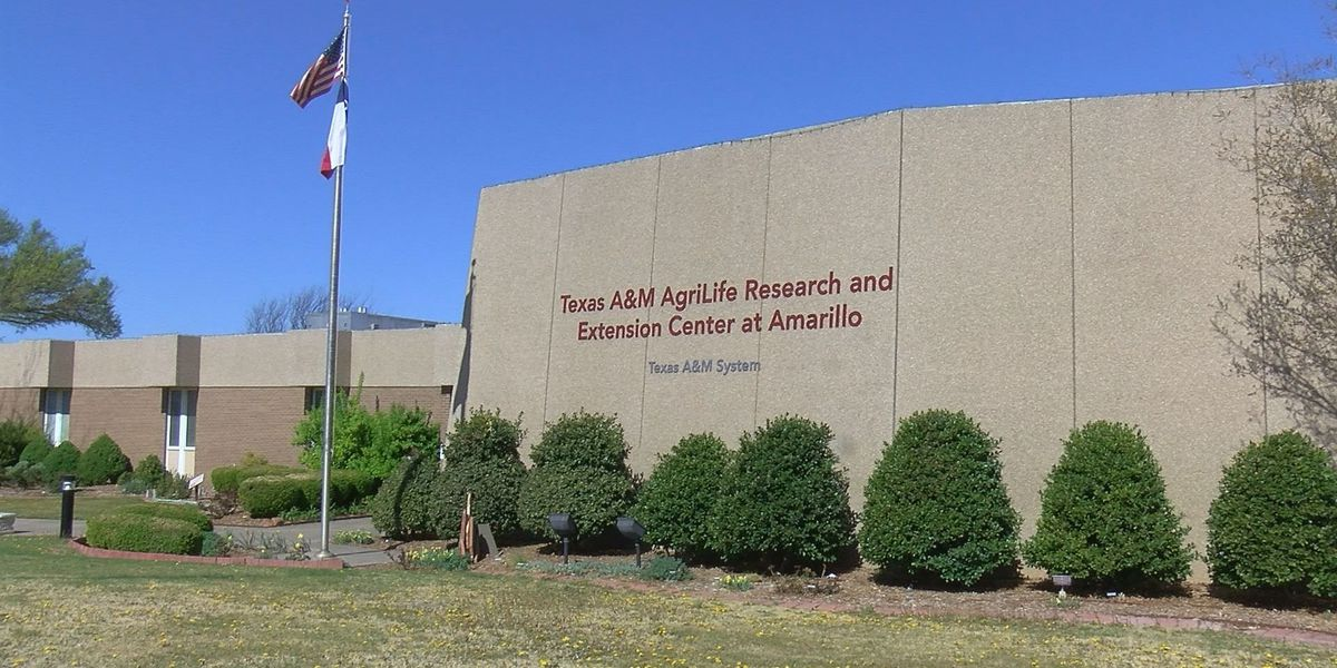 Texas A&M Agrilife Extension and Panhandle Community Services hosting community expo