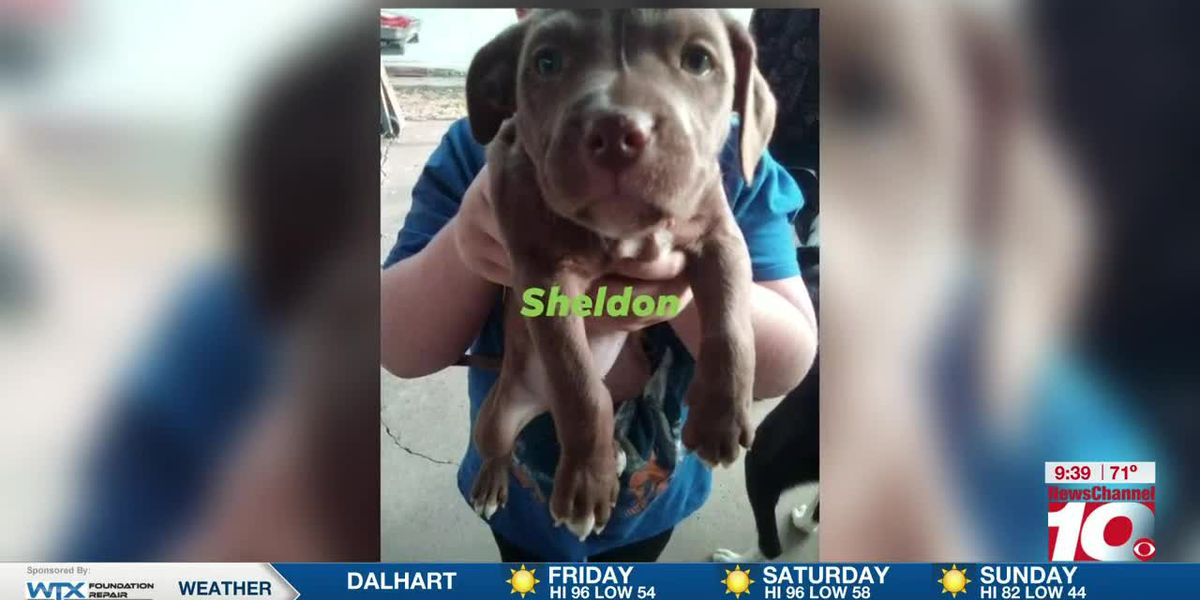 KFDA 2nd Cup: Texas Panhandle Pet Savers to hold adoption specials this weekend