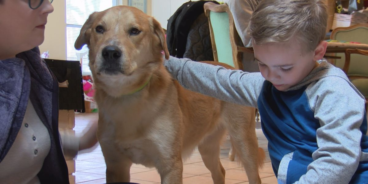 'Hope Lives Here' pairs dog with boy living with sensory disorder