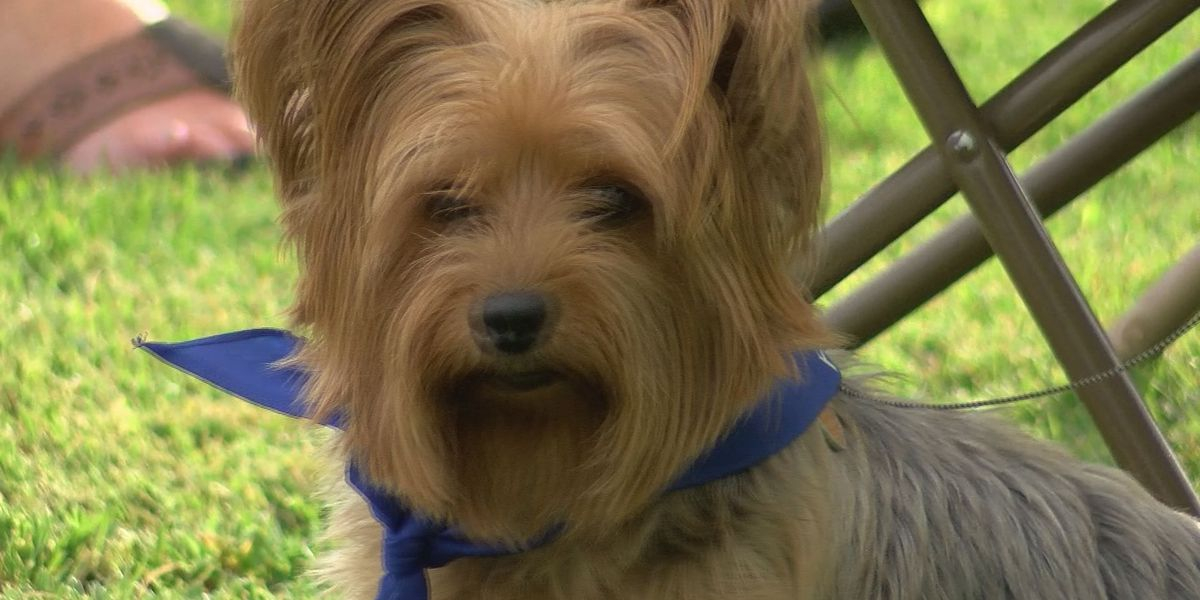 """""""Pints for Pups"""" aims to help local animal shelters"""