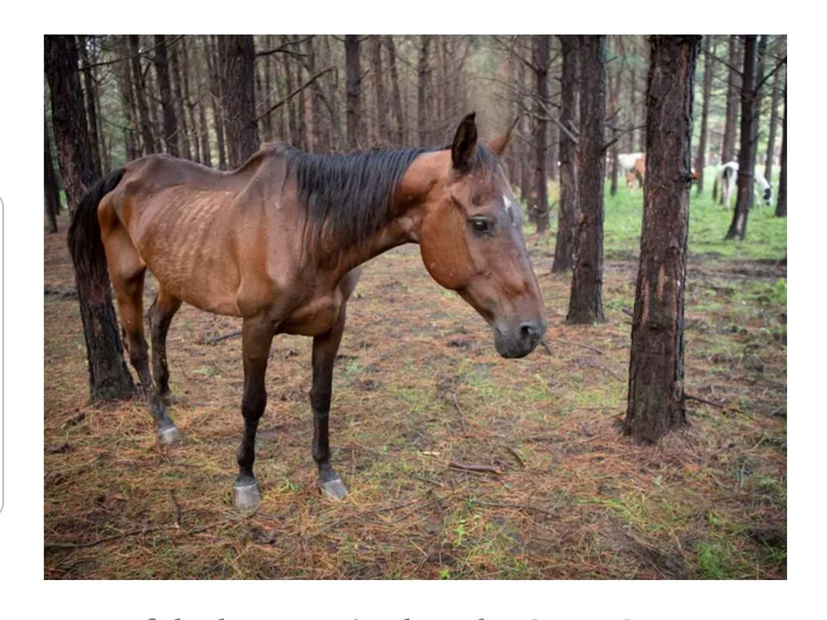 Veteran rescues horses from starving conditions and offers free equine therapy