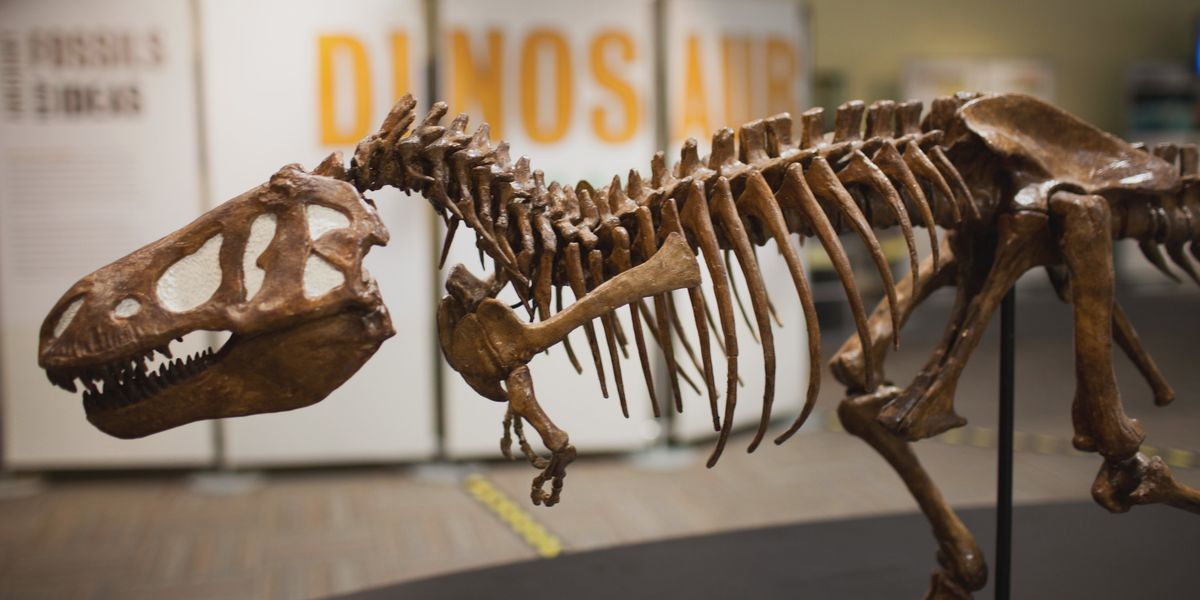 PPHM to open new large-scale dinosaur exhibit