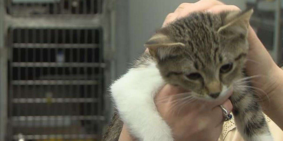 TNR policy passes 1st ordinance reading