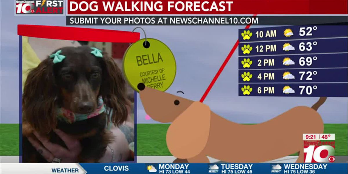 KFDA 2ND CUP: Our first Dog Walking Forecast