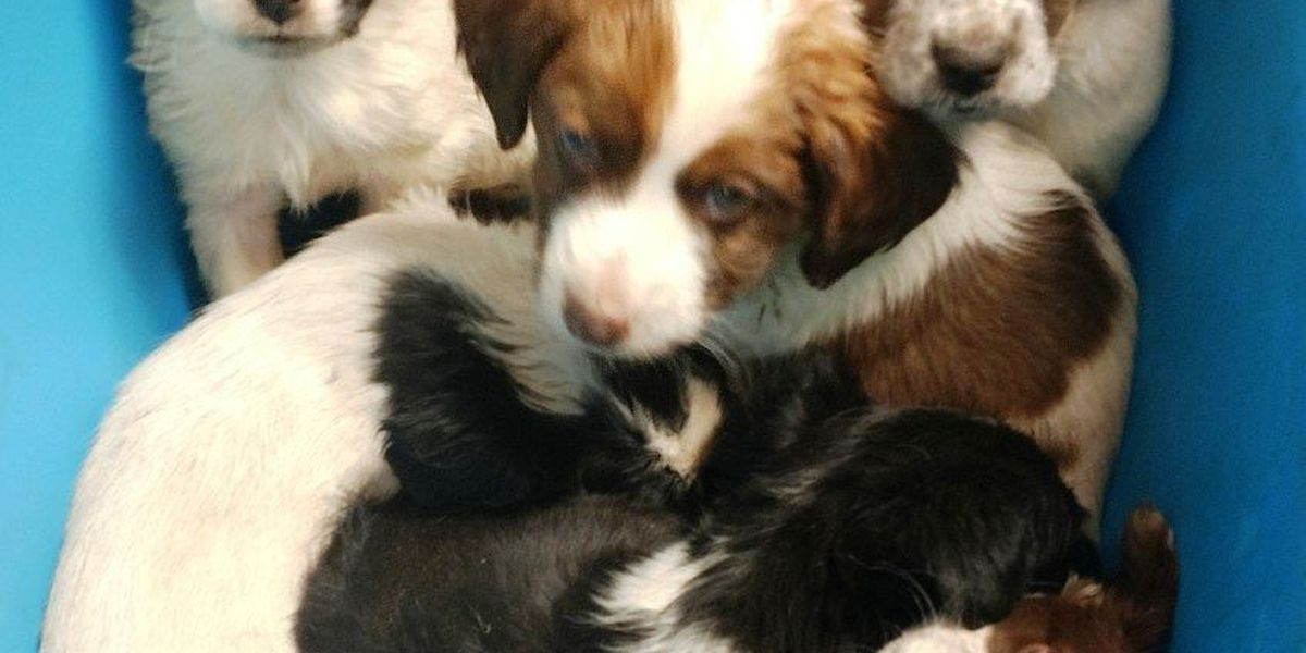 Pups left on city shelter's doorsteps, need new homes