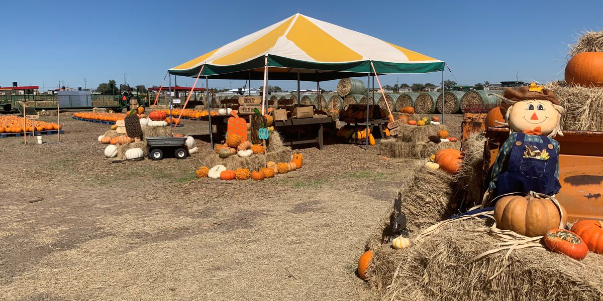 You are invited for holiday family fun at Maxwell's Pumpkin Farm