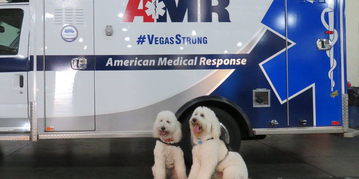 Amarillo therapy dogs helping those working Hurricane Michael relief efforts