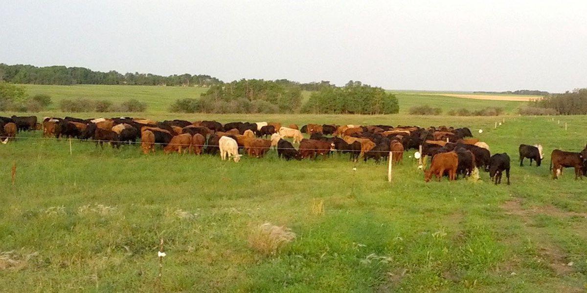 Grass grazing, animal management school begins in Canadian