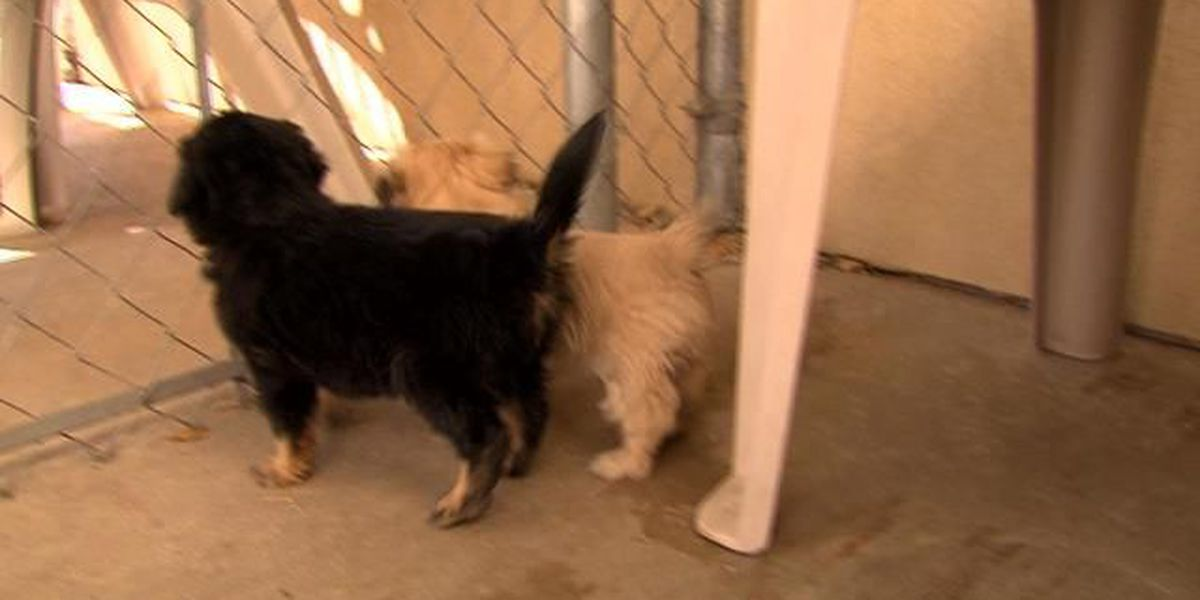 Online pet buying scams affecting area residents