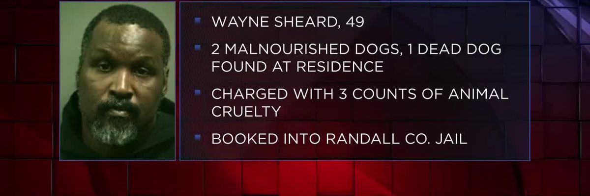 1 man arrested for animal cruelty after deputies find 2 abandoned dogs, 1 dead dog