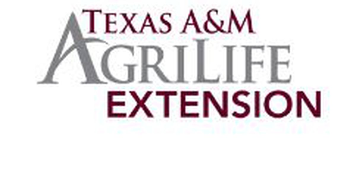 Texas A&M AgriLife Extension webinar to discuss advocating for people with disabilities