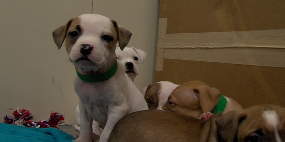 Officials hope community can make a difference for animals at shelter