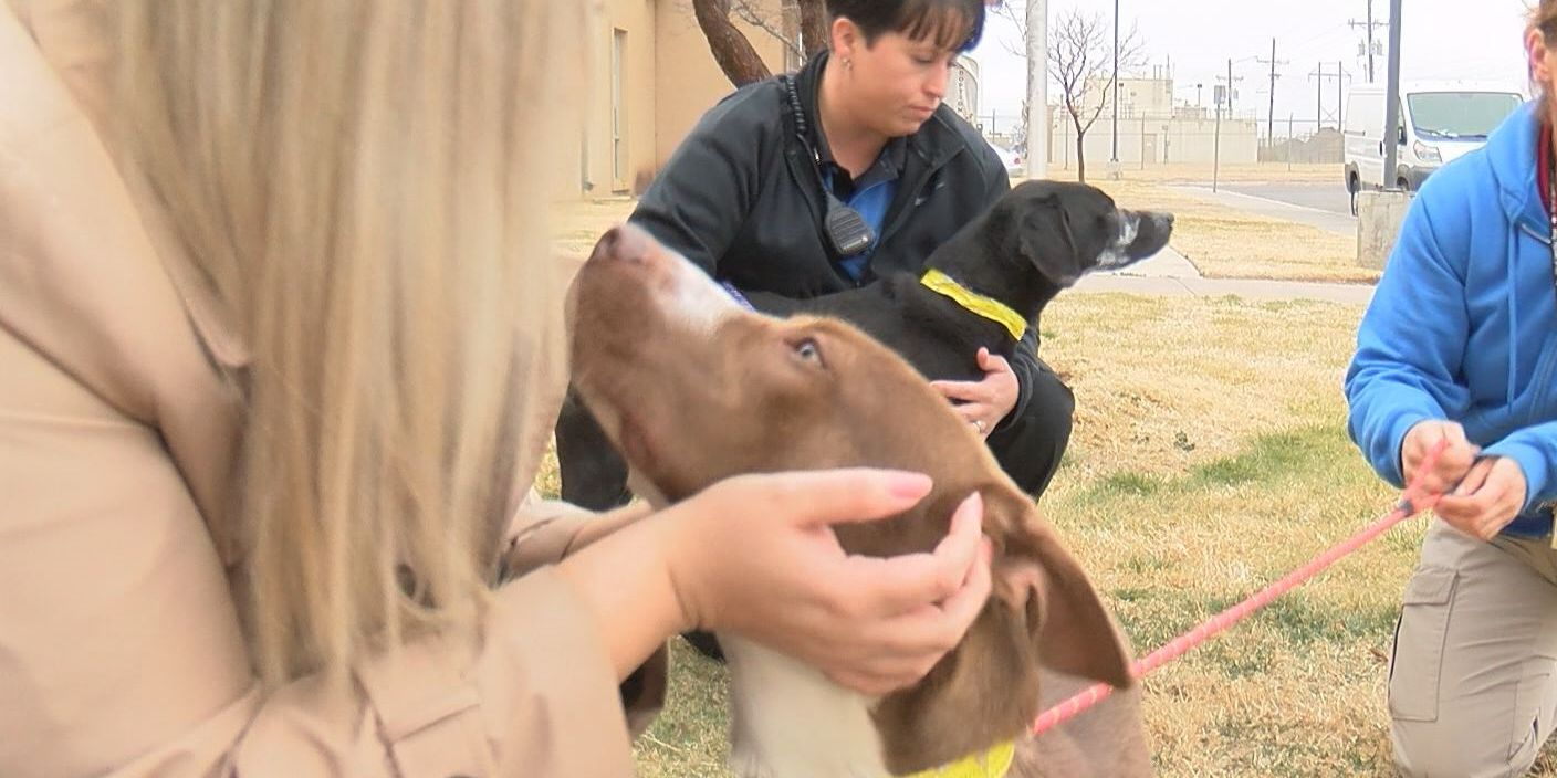 2 dogs looking for new home after animal cruelty incident